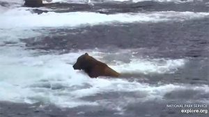 Ursos – Katmai National Park, Alaska powered