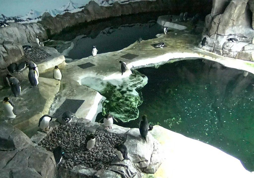 Pinguins Kansas City Zoo Live Cam - Câmeras ao Vivo
