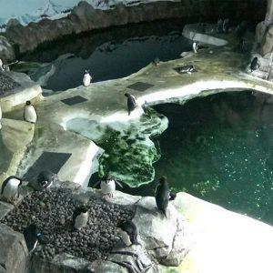 Pinguins Kansas City Zoo